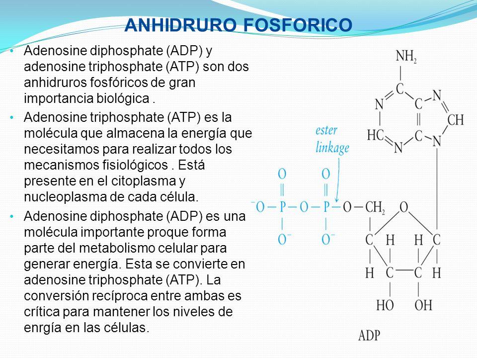 ANHIDRURO FOSFORICO Adenosine diphosphate (ADP) y adenosine triphosphate (ATP) son dos anhidruros fosfóricos de gran importancia biológica. Adenosine