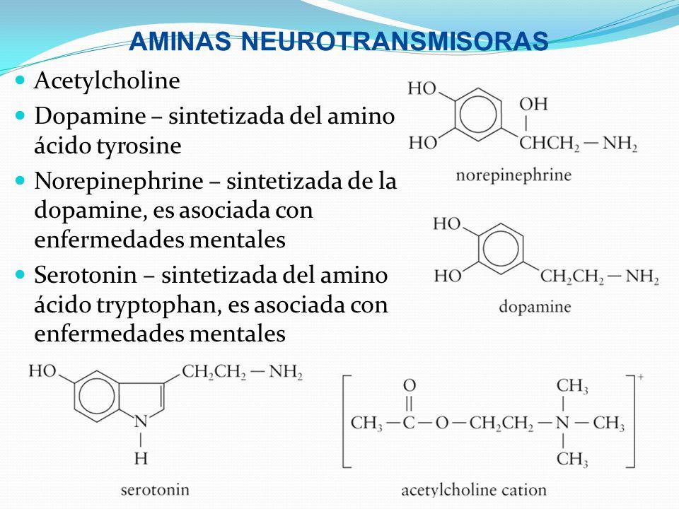 AMINAS NEUROTRANSMISORAS Acetylcholine Dopamine – sintetizada del amino ácido tyrosine Norepinephrine – sintetizada de la dopamine, es asociada con en