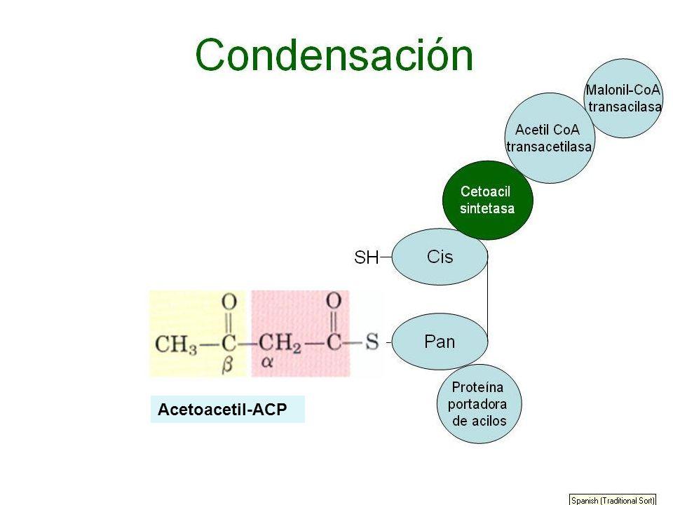 Acetoacetil-ACP