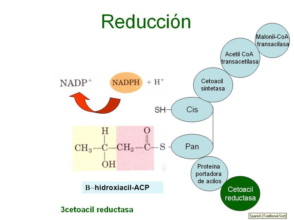 hidroxiacil-ACP