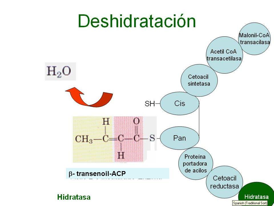 - transenoil-ACP