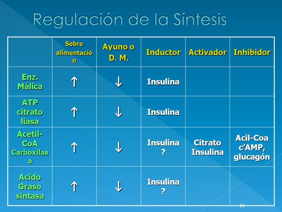 Sobre alimentació n Ayuno o D. M. InductorActivadorInhibidor Enz. Málica Insulina ATP citrato liasa Insulina Acetil- CoA Carboxilas a Insulina ? Citra