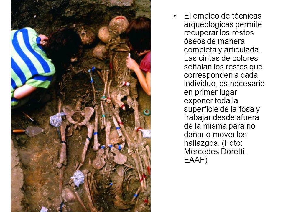 El empleo de técnicas arqueológicas permite recuperar los restos óseos de manera completa y articulada. Las cintas de colores señalan los restos que c