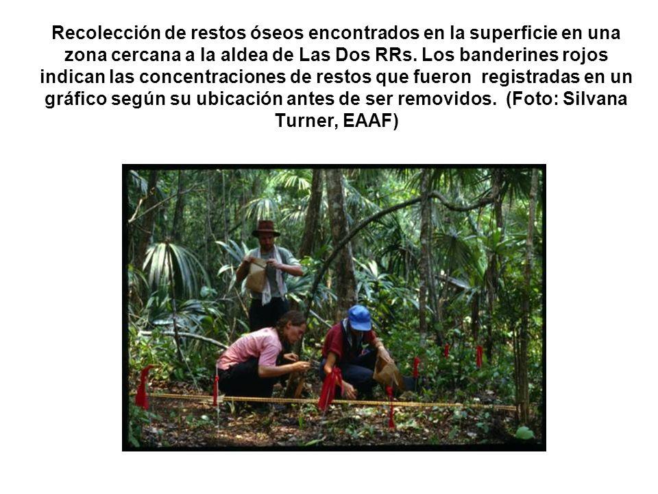 Recolección de restos óseos encontrados en la superficie en una zona cercana a la aldea de Las Dos RRs. Los banderines rojos indican las concentracion