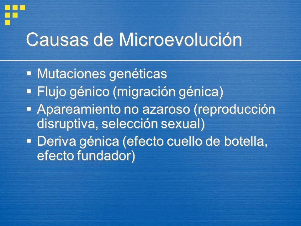 Causas de Microevolución Mutaciones genéticas Flujo génico (migración génica) Apareamiento no azaroso (reproducción disruptiva, selección sexual) Deri