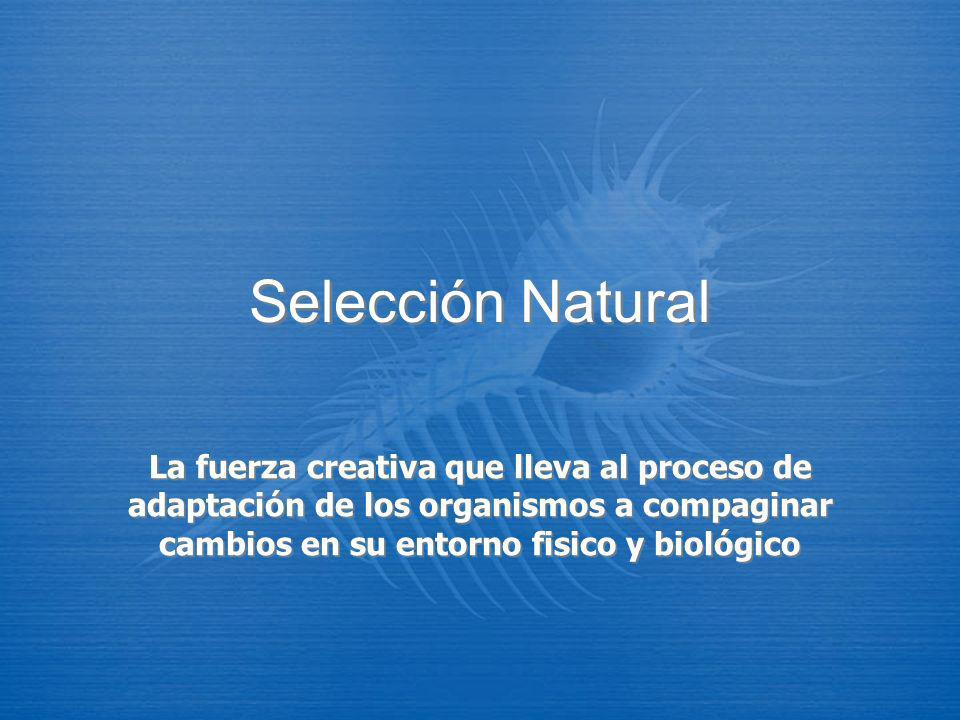 Selección Natural La fuerza creativa que lleva al proceso de adaptación de los organismos a compaginar cambios en su entorno fisico y biológico