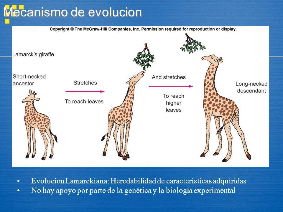 Mecanismo de evolucion Evolucion Lamarckiana: Heredabilidad de caracteristicas adquiridas No hay apoyo por parte de la genética y la biología experime
