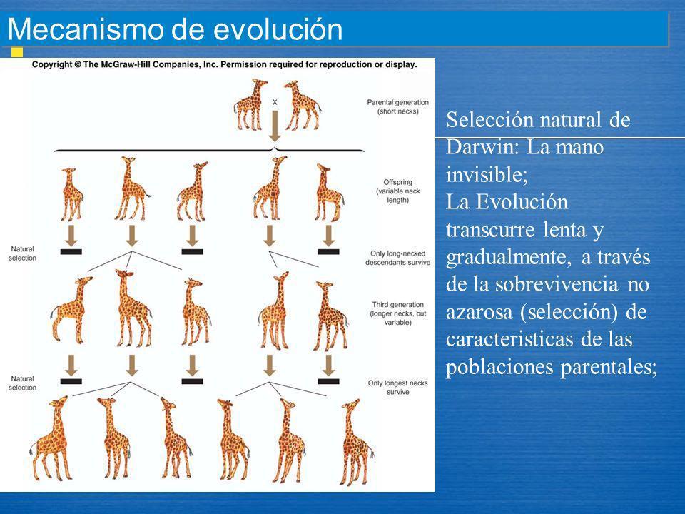 Mecanismo de evolución Selección natural de Darwin: La mano invisible; La Evolución transcurre lenta y gradualmente, a través de la sobrevivencia no a