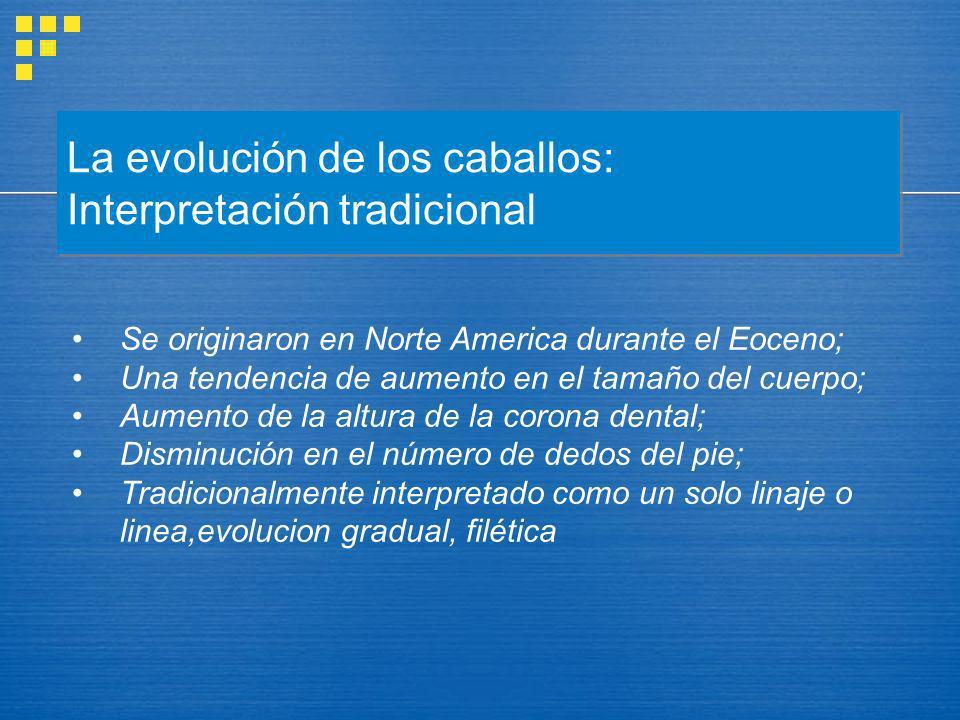 La evolución de los caballos: Interpretación tradicional Se originaron en Norte America durante el Eoceno; Una tendencia de aumento en el tamaño del c
