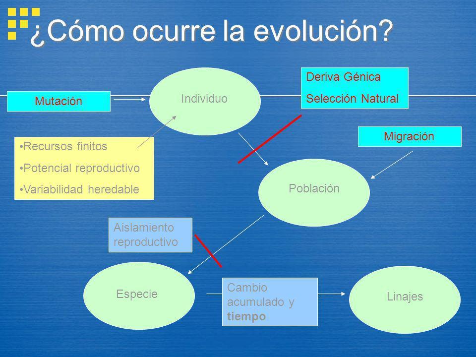 ¿Cómo ocurre la evolución? Individuo Mutación Especie Linajes Aislamiento reproductivo Cambio acumulado y tiempo Deriva Génica Selección Natural Pobla