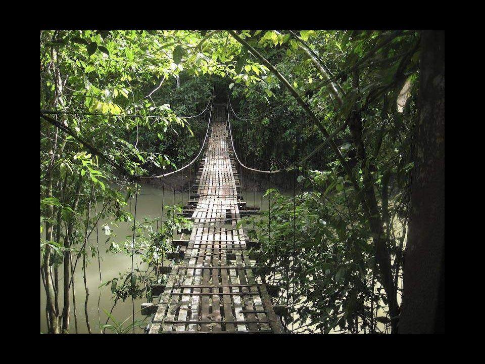 Puente colgante en la bahía Drake, Costa Rica