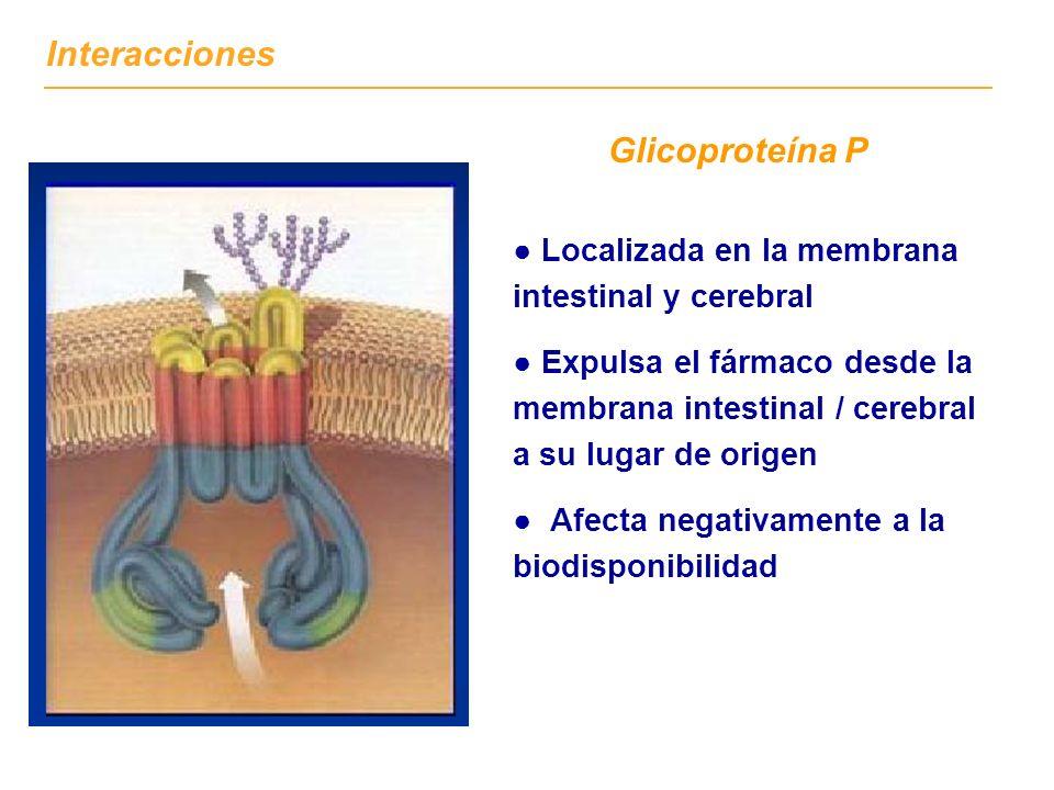 Glicoproteína P Localizada en la membrana intestinal y cerebral Expulsa el fármaco desde la membrana intestinal / cerebral a su lugar de origen Afecta negativamente a la biodisponibilidad Interacciones