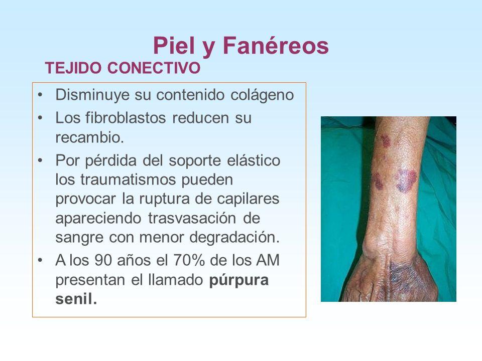 Piel y Fanéreos TEJIDO CONECTIVO Disminuye su contenido colágeno Los fibroblastos reducen su recambio. Por pérdida del soporte elástico los traumatism