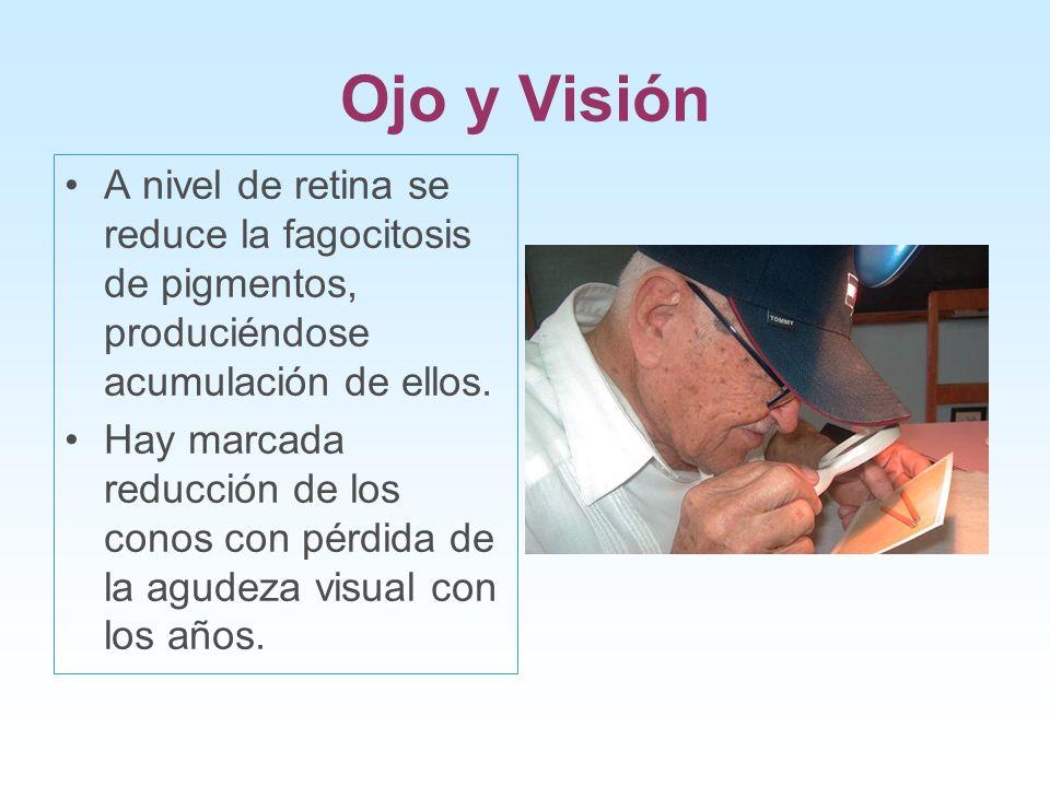 Ojo y Visión A nivel de retina se reduce la fagocitosis de pigmentos, produciéndose acumulación de ellos. Hay marcada reducción de los conos con pérdi