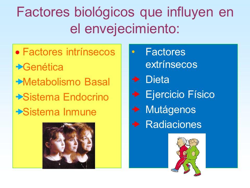 Factores biológicos que influyen en el envejecimiento: Factores intrínsecos Genética Metabolismo Basal Sistema Endocrino Sistema Inmune Factores extrí