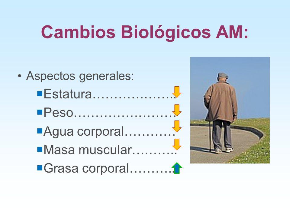 Cambios Biológicos AM: Aspectos generales: Estatura……………….. Peso…………………… Agua corporal………… Masa muscular……….. Grasa corporal………...