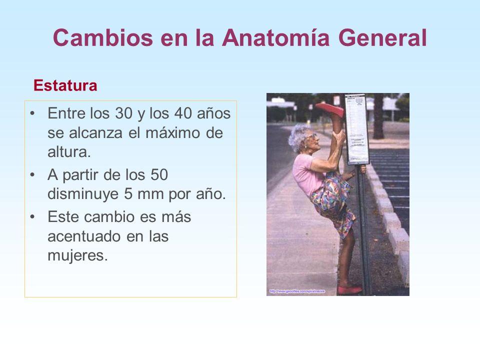 Cambios en la Anatomía General Entre los 30 y los 40 años se alcanza el máximo de altura. A partir de los 50 disminuye 5 mm por año. Este cambio es má