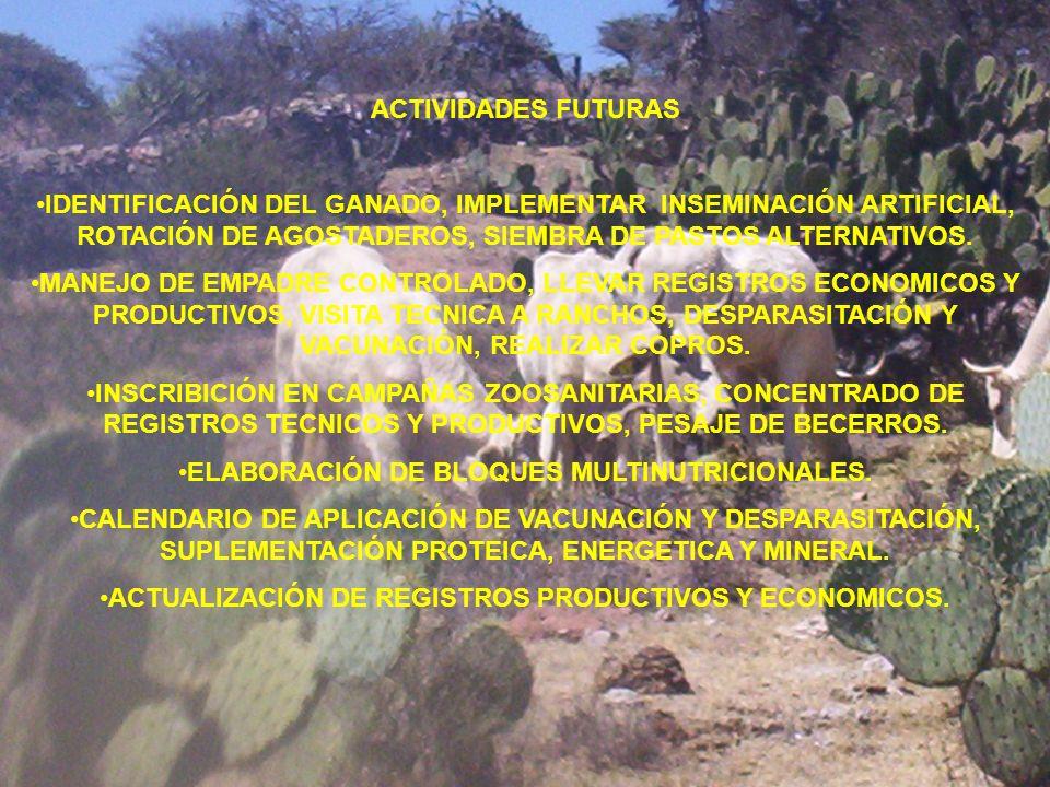 ACTIVIDADES FUTURAS IDENTIFICACIÓN DEL GANADO, IMPLEMENTAR INSEMINACIÓN ARTIFICIAL, ROTACIÓN DE AGOSTADEROS, SIEMBRA DE PASTOS ALTERNATIVOS. MANEJO DE