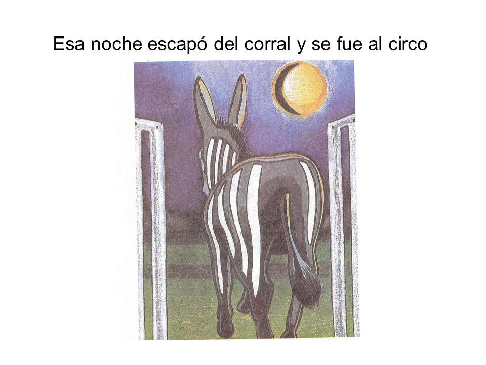 Se imaginaba en la marquesina: Rufina la cebra intrépiday corrió y corrió tejiendo sueños en su cabeza.