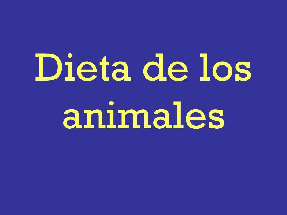 Dieta de los animales