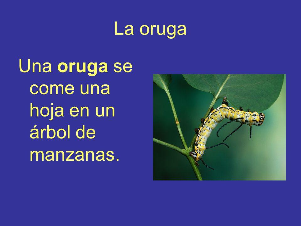 La oruga Una oruga se come una hoja en un árbol de manzanas.