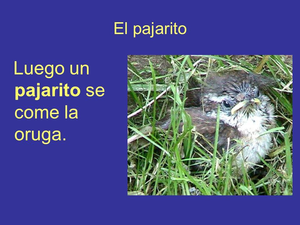 El pajarito Luego un pajarito se come la oruga.