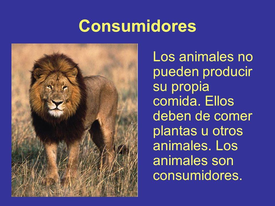 Consumidores Los animales no pueden producir su propia comida. Ellos deben de comer plantas u otros animales. Los animales son consumidores.