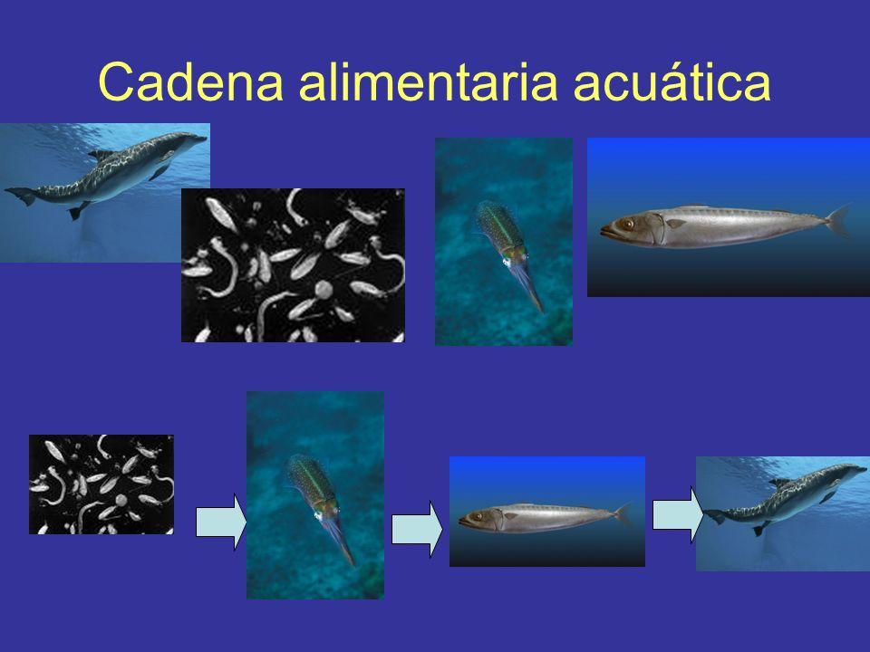 Cadena alimentaria acuática