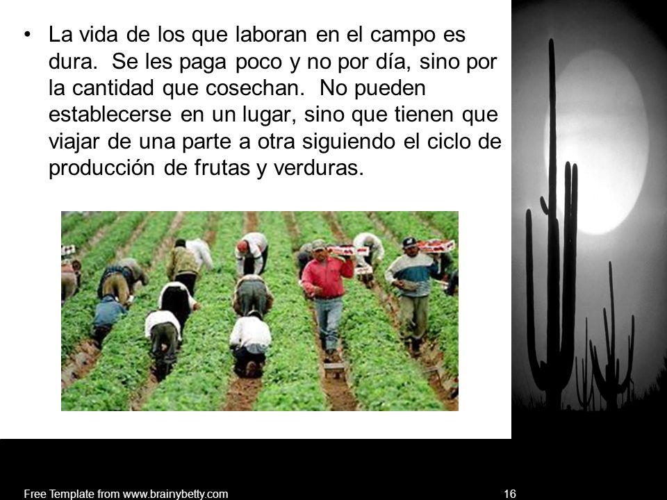 La vida de los que laboran en el campo es dura. Se les paga poco y no por día, sino por la cantidad que cosechan. No pueden establecerse en un lugar,