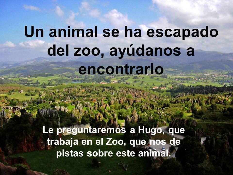 Un animal se ha escapado del zoo, ayúdanos a encontrarlo Le preguntaremos a Hugo, que trabaja en el Zoo, que nos de pistas sobre este animal.