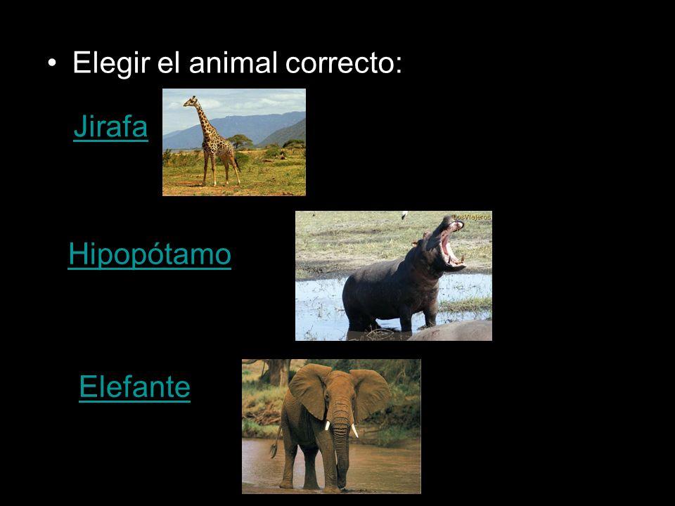 Elegir el animal correcto: Jirafa Hipopótamo Elefante