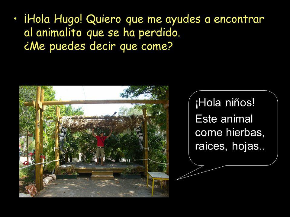 ¡Hola Hugo! Quiero que me ayudes a encontrar al animalito que se ha perdido. ¿Me puedes decir que come? ¡Hola niños! Este animal come hierbas, raíces,