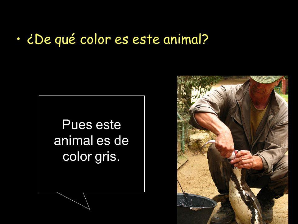¿De qué color es este animal? Pues este animal es de color gris.