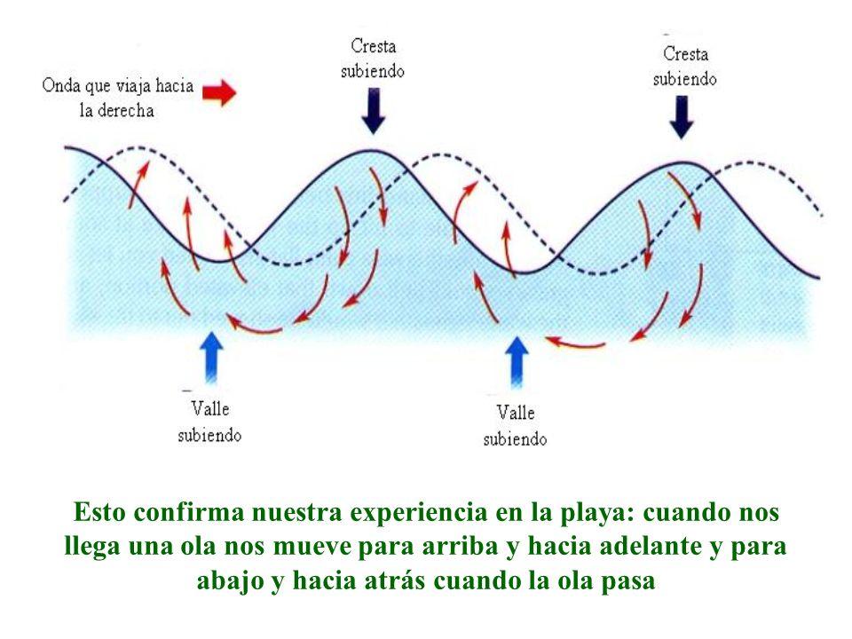 Esto confirma nuestra experiencia en la playa: cuando nos llega una ola nos mueve para arriba y hacia adelante y para abajo y hacia atrás cuando la ol