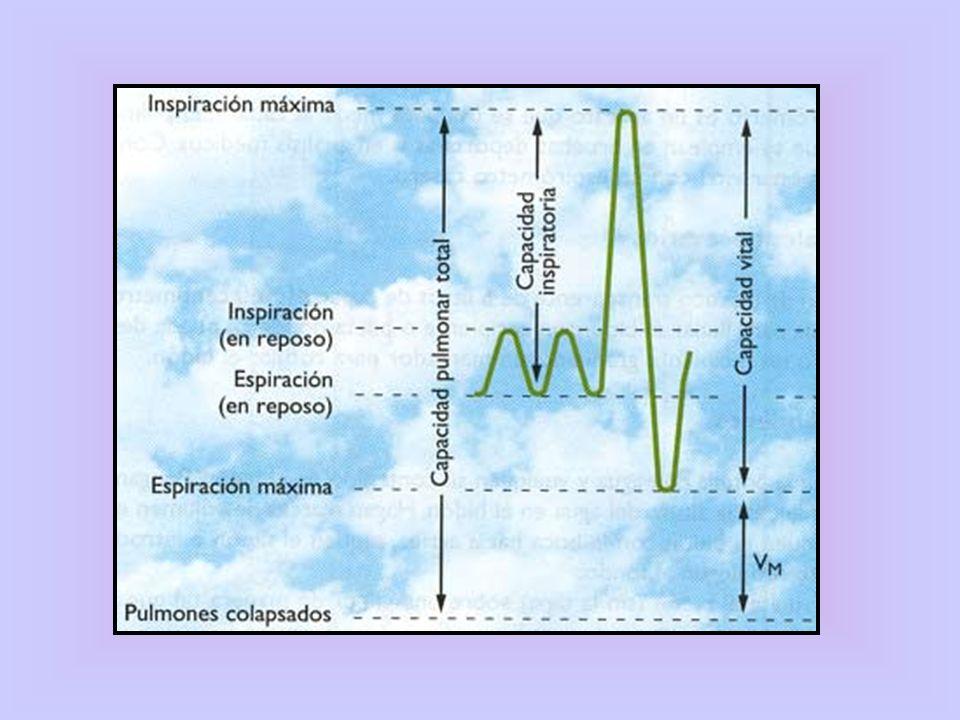 Valentina Ramírez12 ¿Qué provoca la Hipotermia?¿Qué provoca la Hipotermia?