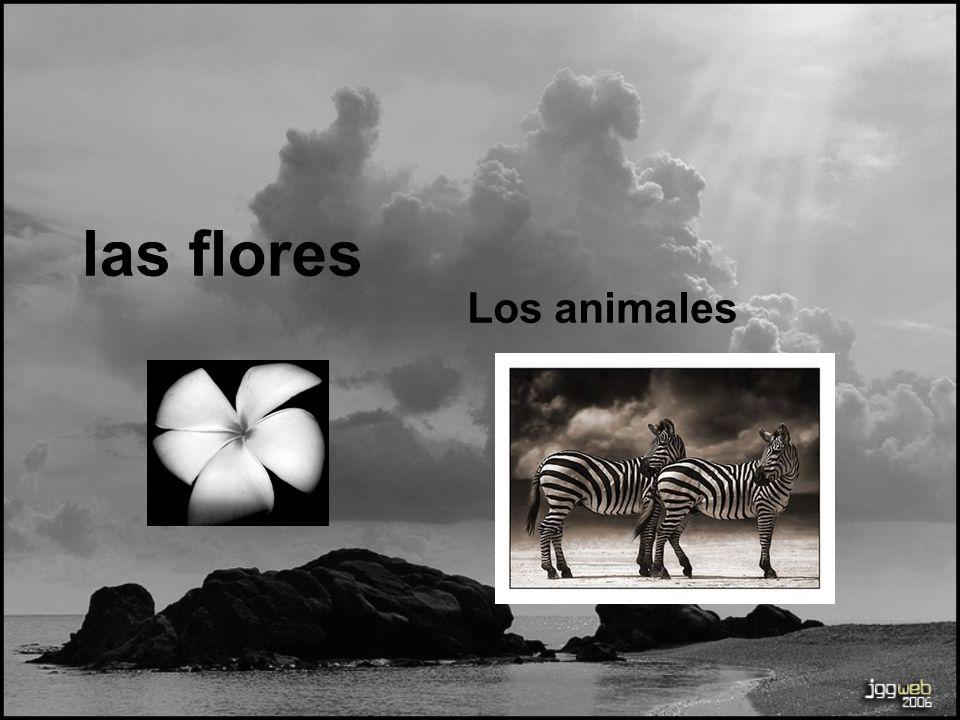 las flores Los animales