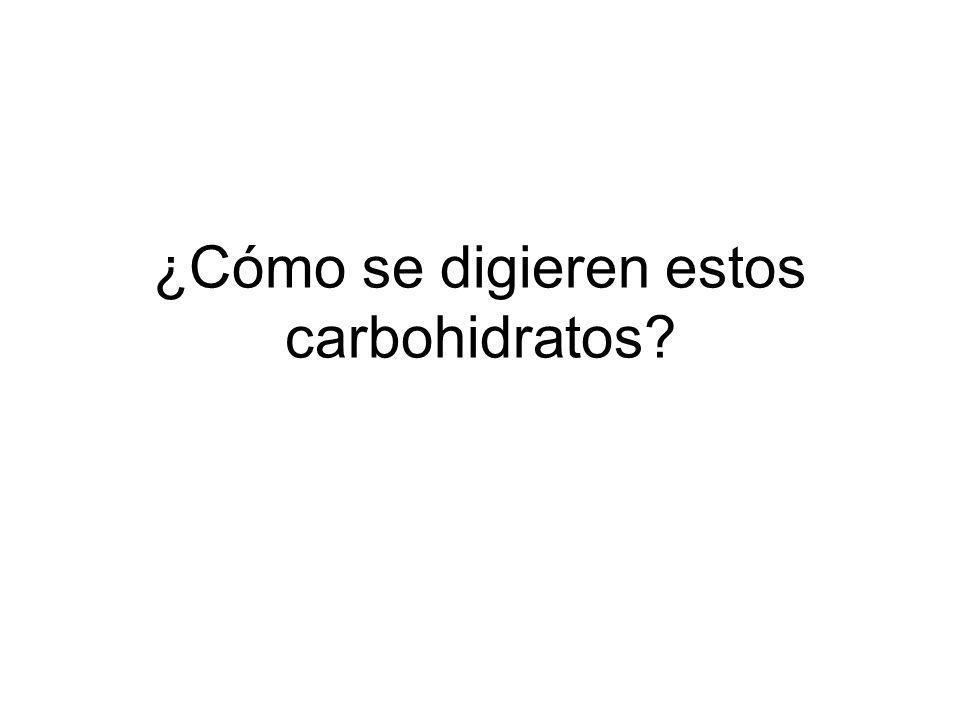 ¿Cómo se digieren estos carbohidratos?