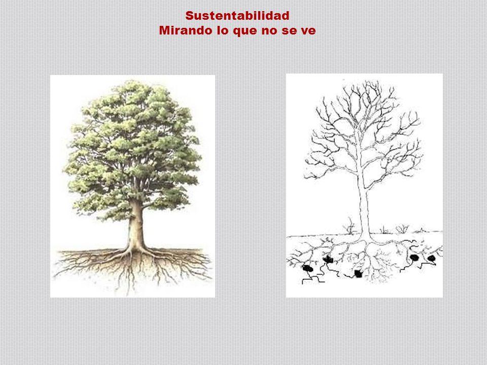 Sustentabilidad Mirando lo que no se ve