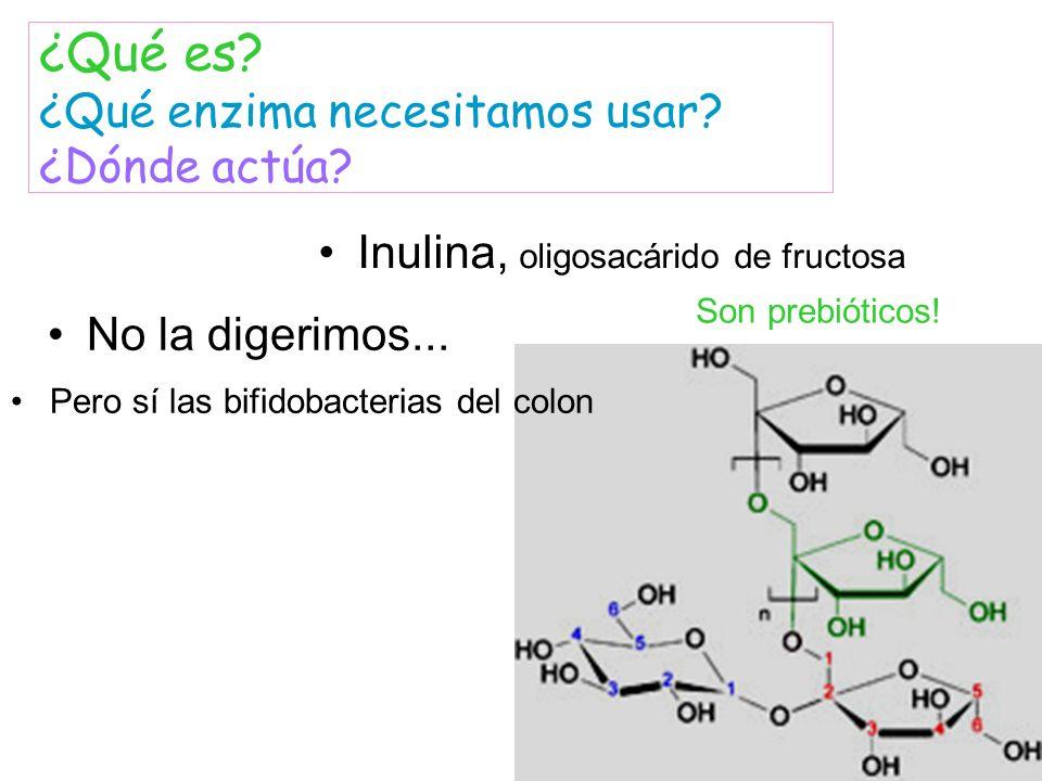 Inulina, oligosacárido de fructosa ¿Qué es? ¿Qué enzima necesitamos usar? ¿Dónde actúa? No la digerimos... Pero sí las bifidobacterias del colon Son p
