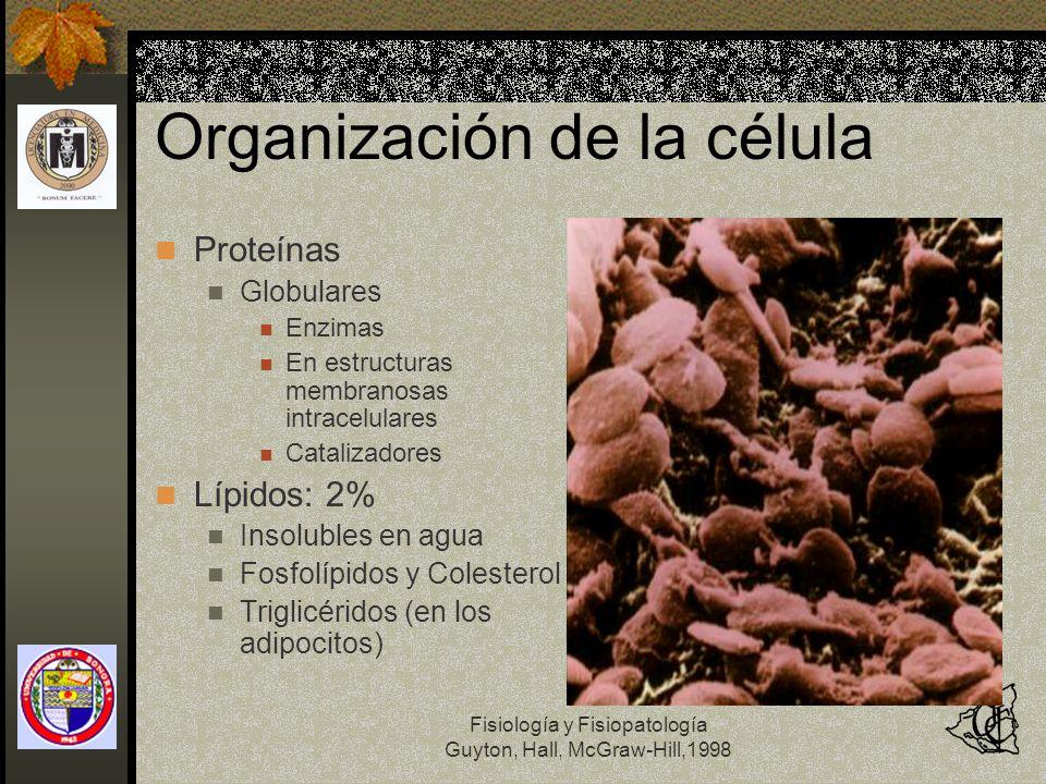 Fisiología y Fisiopatología Guyton, Hall, McGraw-Hill,1998 Organización de la célula Proteínas Globulares Enzimas En estructuras membranosas intracelu