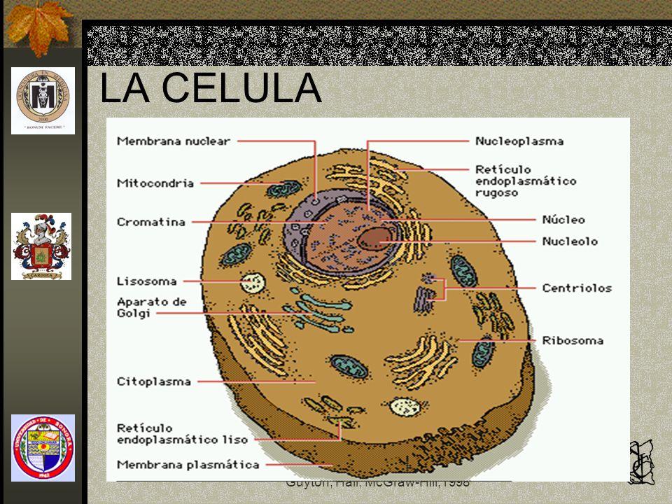 Fisiología y Fisiopatología Guyton, Hall, McGraw-Hill,1998 El núcleo celular La membrana nuclear es doble Una dentro de la otra La externa se continúa con el RE Tiene miles de poros nucleares para el paso de moléculas de 15000 a 44000