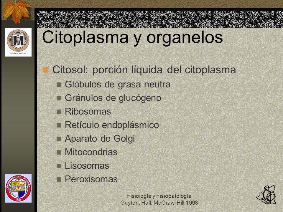 Fisiología y Fisiopatología Guyton, Hall, McGraw-Hill,1998 Citoplasma y organelos Citosol: porción líquida del citoplasma Glóbulos de grasa neutra Grá