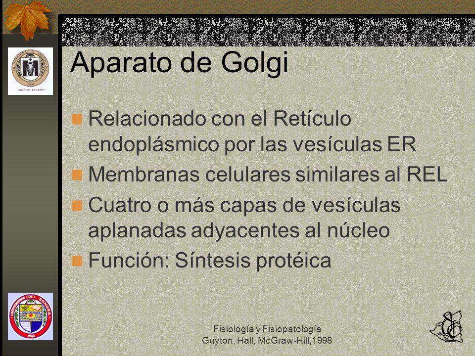 Fisiología y Fisiopatología Guyton, Hall, McGraw-Hill,1998 Aparato de Golgi Relacionado con el Retículo endoplásmico por las vesículas ER Membranas ce