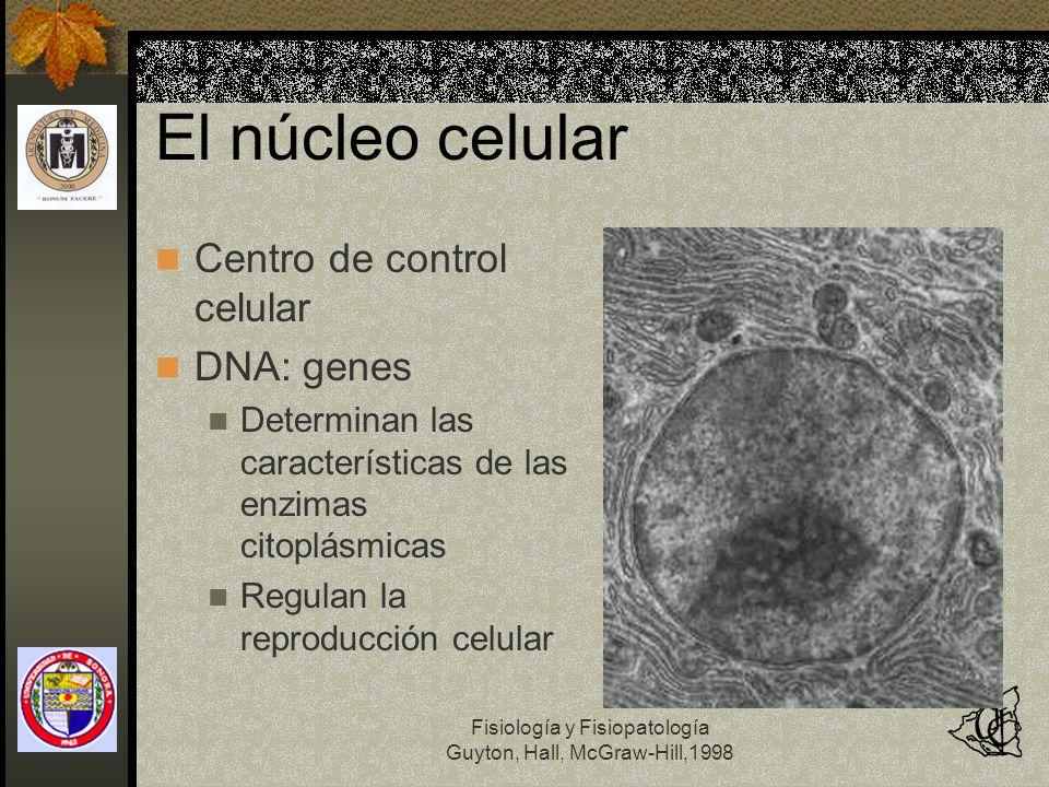 Fisiología y Fisiopatología Guyton, Hall, McGraw-Hill,1998 El núcleo celular Centro de control celular DNA: genes Determinan las características de la