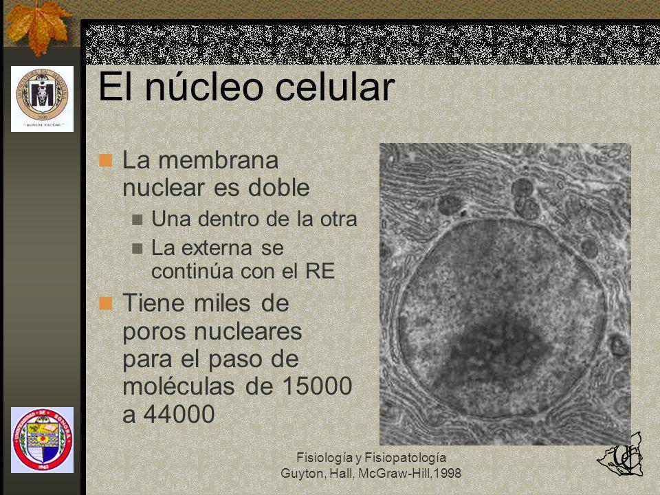 Fisiología y Fisiopatología Guyton, Hall, McGraw-Hill,1998 El núcleo celular La membrana nuclear es doble Una dentro de la otra La externa se continúa