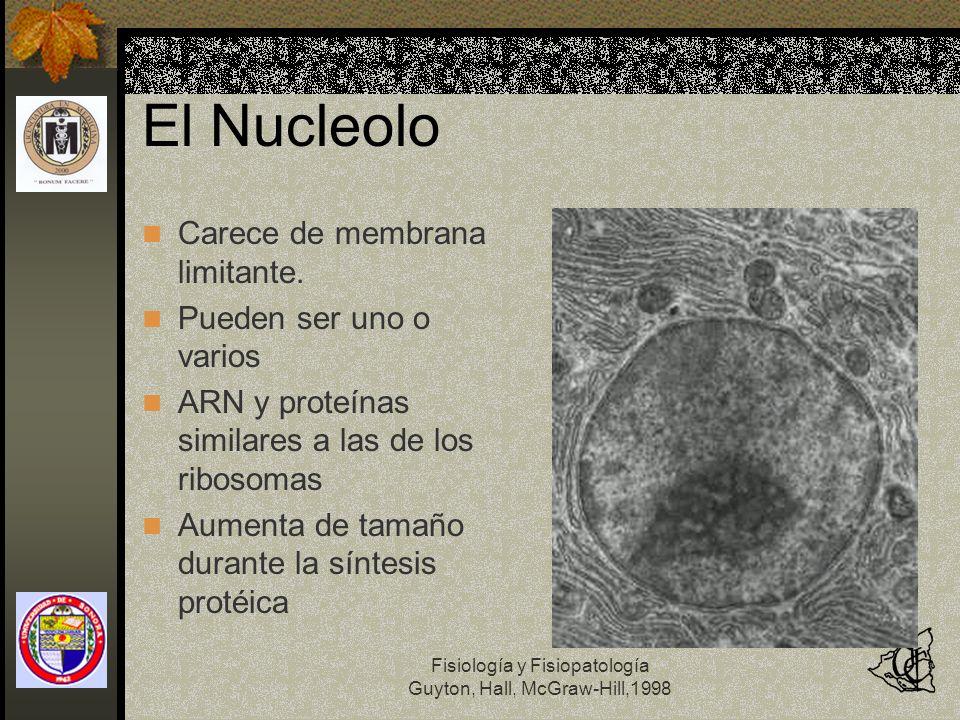 Fisiología y Fisiopatología Guyton, Hall, McGraw-Hill,1998 El Nucleolo Carece de membrana limitante. Pueden ser uno o varios ARN y proteínas similares