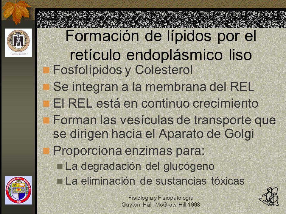 Fisiología y Fisiopatología Guyton, Hall, McGraw-Hill,1998 Formación de lípidos por el retículo endoplásmico liso Fosfolípidos y Colesterol Se integra