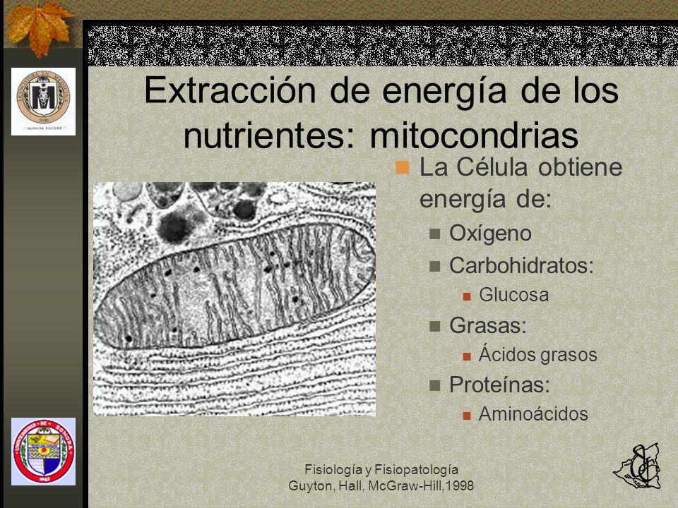 Fisiología y Fisiopatología Guyton, Hall, McGraw-Hill,1998 Extracción de energía de los nutrientes: mitocondrias La Célula obtiene energía de: Oxígeno