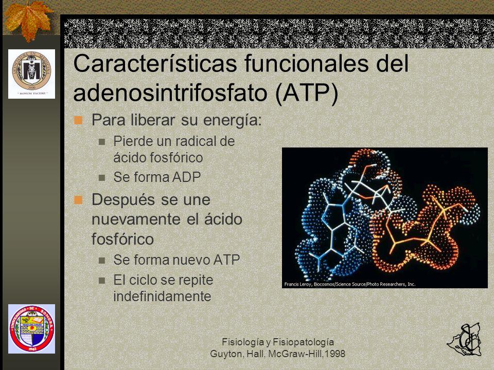 Fisiología y Fisiopatología Guyton, Hall, McGraw-Hill,1998 Características funcionales del adenosintrifosfato (ATP) Para liberar su energía: Pierde un