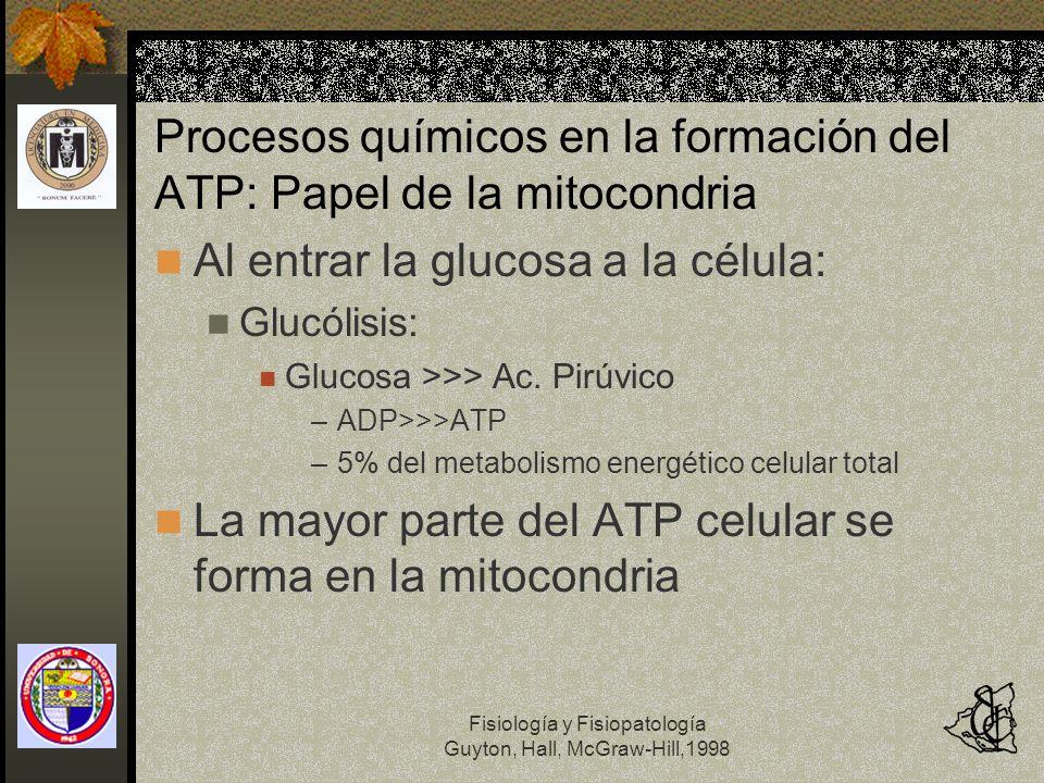 Fisiología y Fisiopatología Guyton, Hall, McGraw-Hill,1998 Procesos químicos en la formación del ATP: Papel de la mitocondria Al entrar la glucosa a l